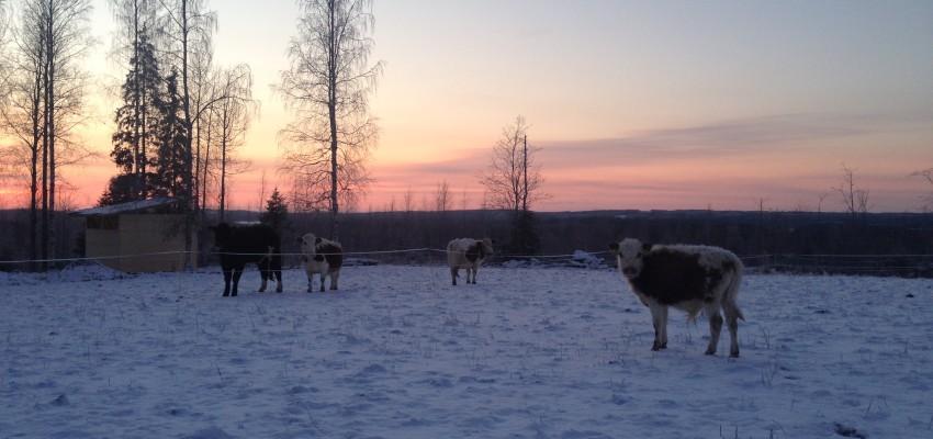 Eläimien talvi