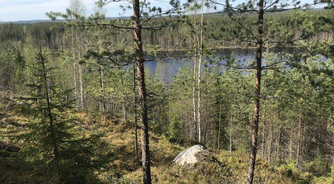 Metsän hoitoa erilaisesta näkökulmasta
